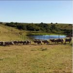 Malabrigo Farm